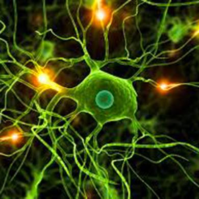 rieducazione-neurologica-phision